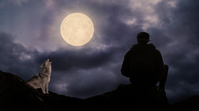 Luna lobo 4